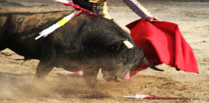 Anti-Bullfight