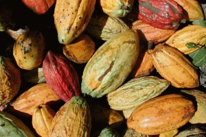 Delays in the delivery of Venezuelan cacao could see it removed from European and Japanse chocolate recipes.