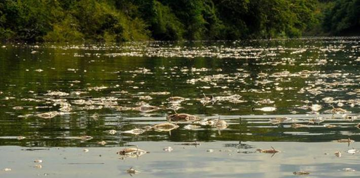 Thousands of fish of 20 different species were found dead in the Guatemalan river La Pasión